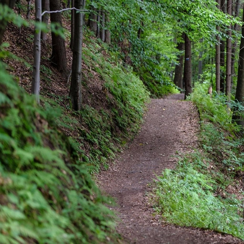 Visiting a State Park Walking Trail is a great cheap vacation idea min