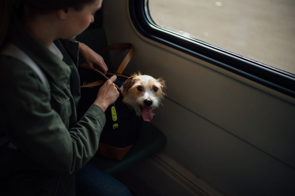 Pet Travel Carriers totes