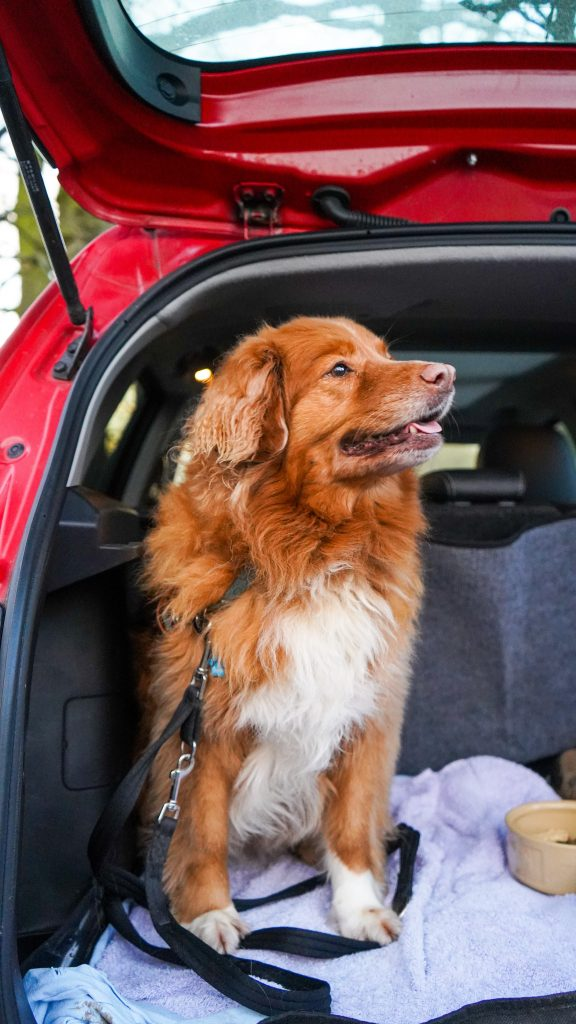 Traveling in the Car with Your Dog Training