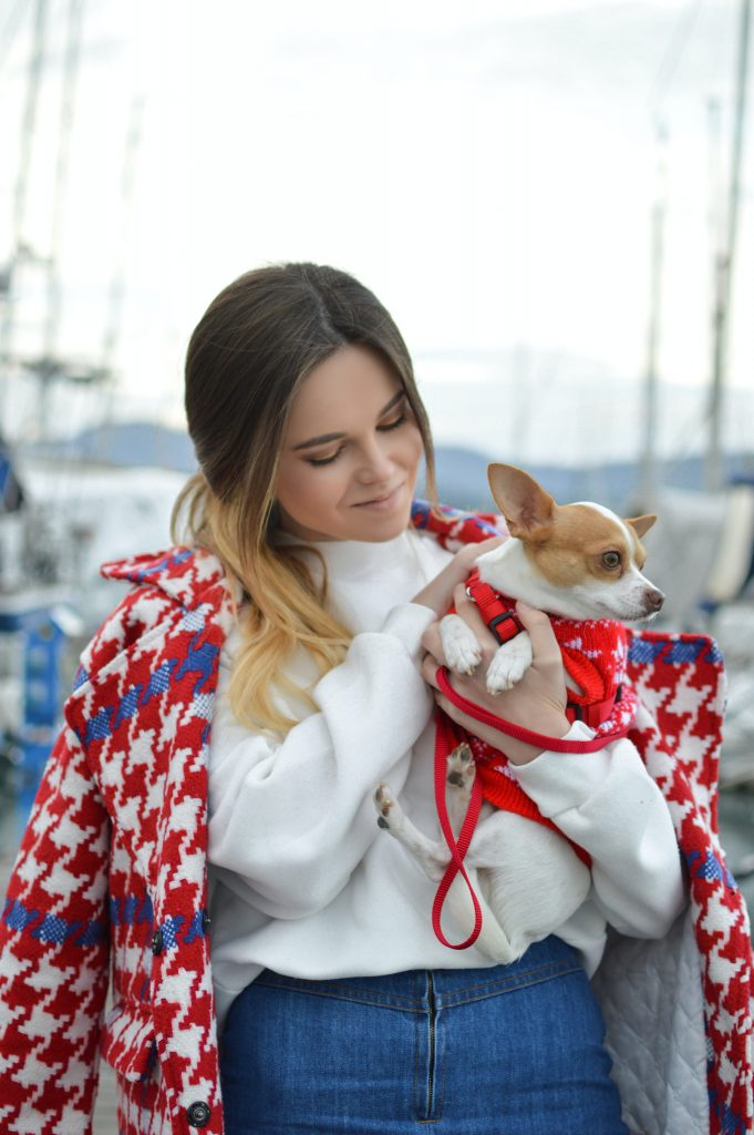 Traveling With Your Chihuahua