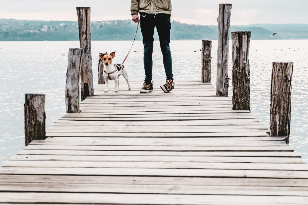 top 10 pet care tips for travelers