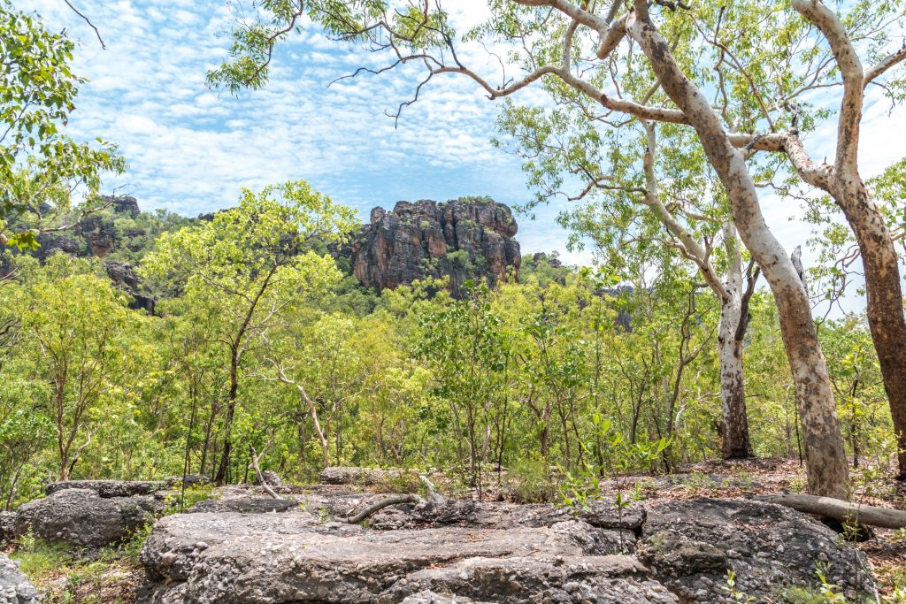 our Kakadu in Australia's Top 1 End