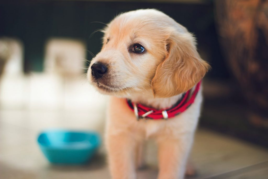 Holiday Travel with your Pets - Taking Pets on Vacation