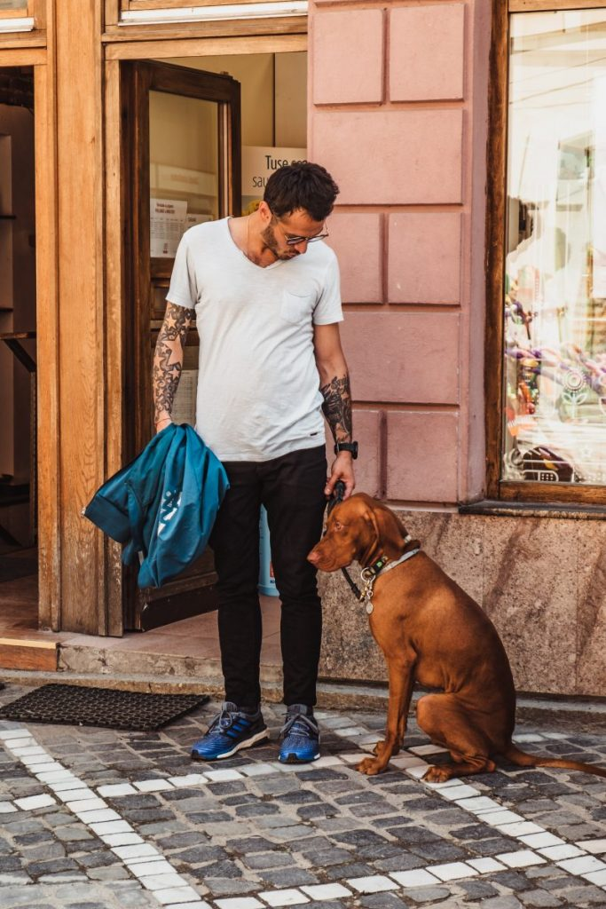 Tips on Moving with Pets