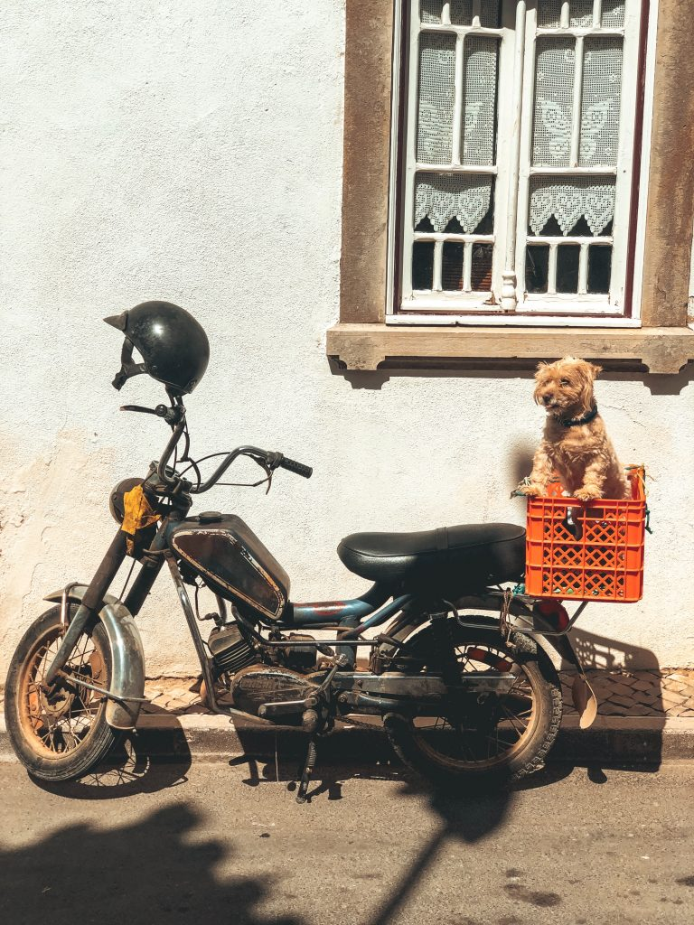 Motorcycle Pet Carrier Dangers and How to Avoid Them