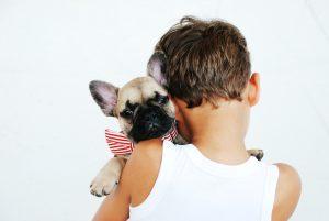 boy Pet Friendly Getawaysfawn pug puppy