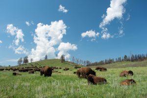 Torrey Pines State Preserve