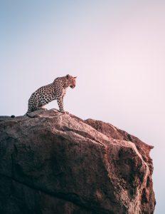 The 10 Commandments Of A Super Safari.