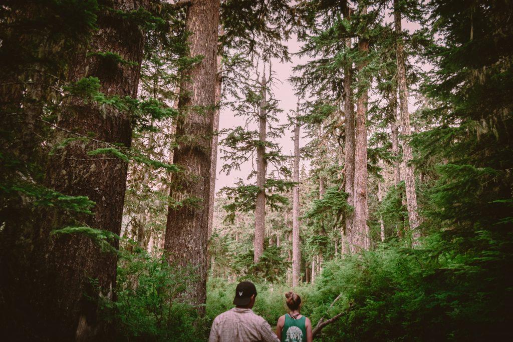 Seattle, Washington Wildlife