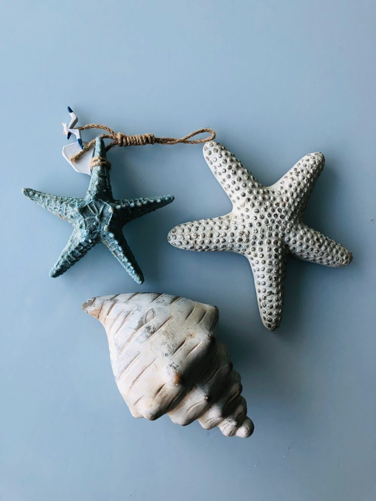 Seashells: Artifacts of the Ocean