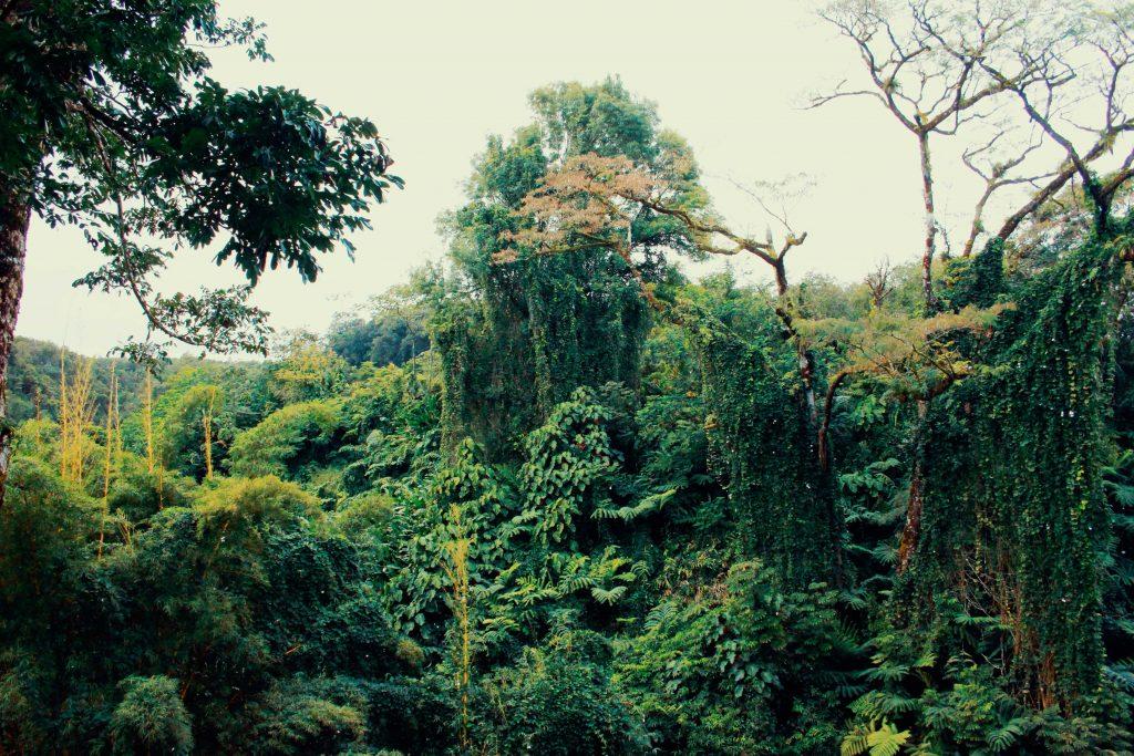 Above Puerto Vallarta Discover The Mountainous Rainforest