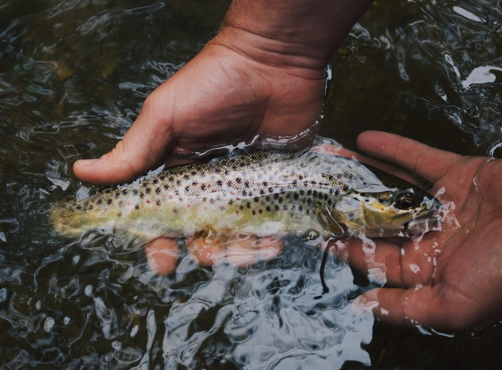 Ontario Fishing Tips