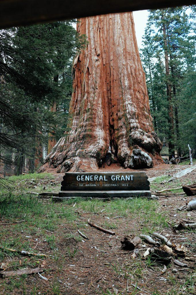 Sequoia Park: California Vacation: Sequoia Park
